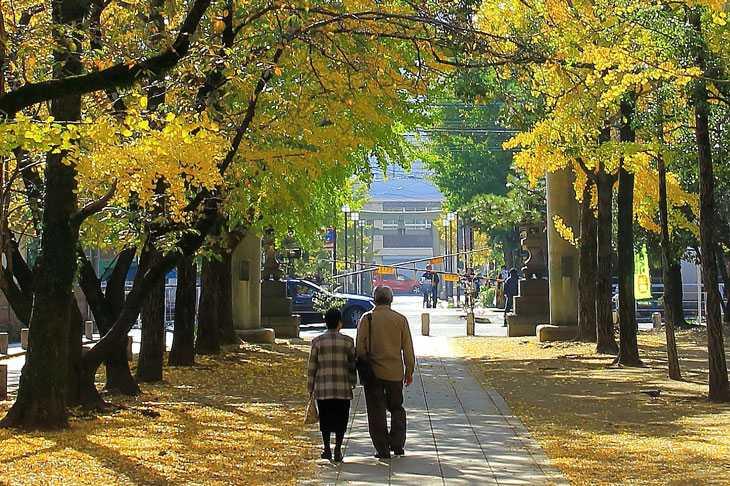 銀杏並木を歩く高齢の夫婦